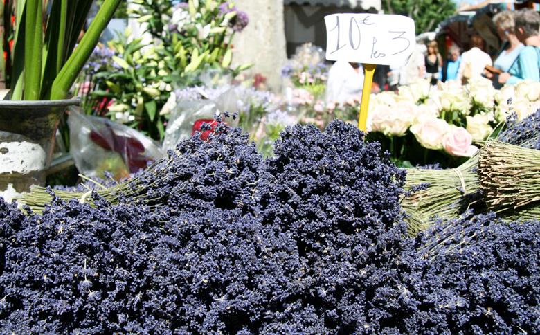 Lavande Provence13