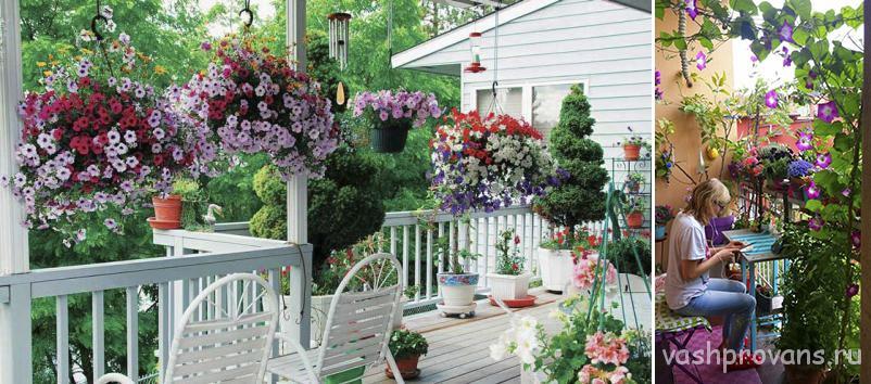 cvety-balkon-provans