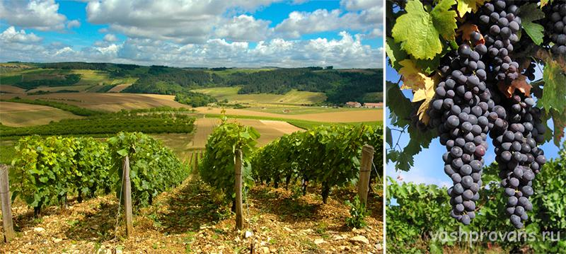 vinogradniki-provans-franciya